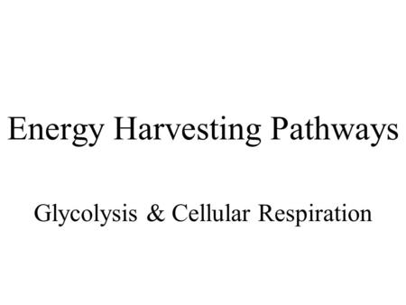 Energy Harvesting Pathways Glycolysis & Cellular Respiration.