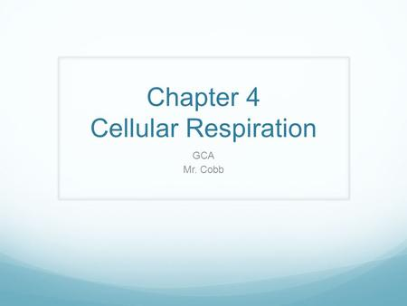 "Chapter 4 Cellular Respiration GCA Mr. Cobb Cellular respiration Food (glucose) into ATP Not ""breathing"" It can be either aerobic or anaerobic Aerobic."