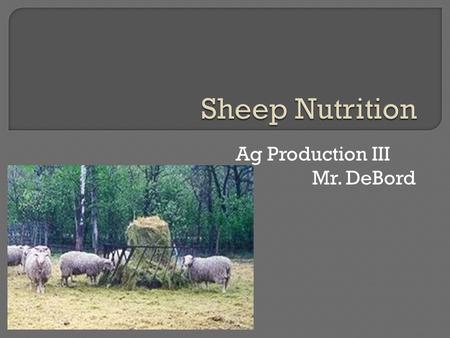 Ag Production III Mr. DeBord.  The largest single production cost in any livestock operation is feed. Due to the unique nature of the sheep's gastrointestinal.