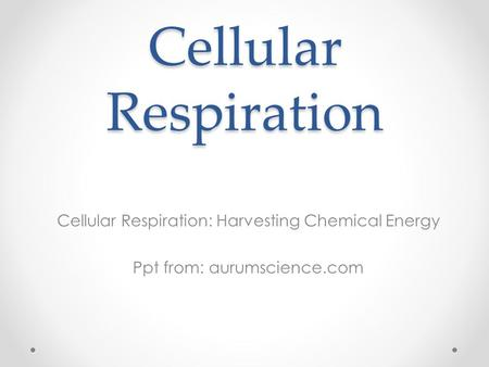 Cellular Respiration Cellular Respiration: Harvesting Chemical Energy Ppt from: aurumscience.com.