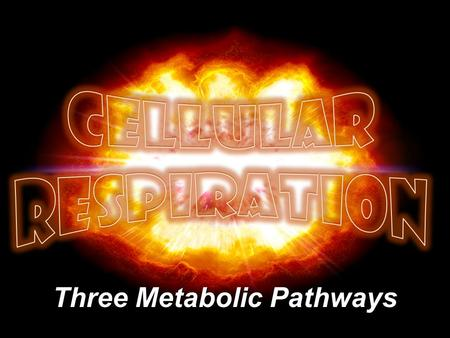 Three Metabolic Pathways. Pathways of Cell Respiration 2 234.