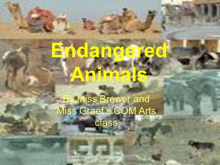 By: The COM ARTS class of Miss Brewer and Miss Graef Endangered Animals By Miss Brewer and Miss Graef's COM Arts class.