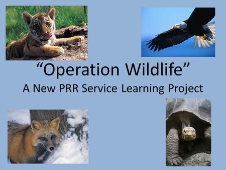 """Operation Wildlife"" A New PRR Service Learning Project."