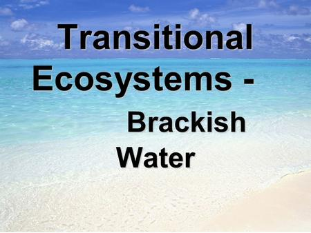 Transitional Ecosystems - Brackish Water. I. Brackish water –is a term used for areas wherefreshwater combines with salty ocean water. A. It is not as.