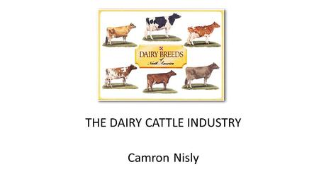 THE DAIRY CATTLE INDUSTRY Camron Nisly. Improving Genetics Careful breeding to increase yield Use A. I. to match correct bull with cows to enhance: Udder,
