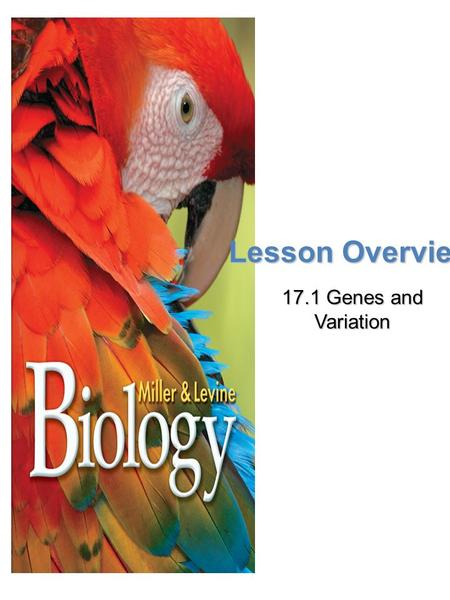 Lesson Overview 17.1 Genes and Variation. Lesson Overview Lesson Overview Genes and Variation Genotype and Phenotype in Evolution Population – mating.