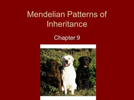 Mendelian Patterns of Inheritance Chapter 9. Introduction Gazelle always produce baby gazelles, not bluebirds.