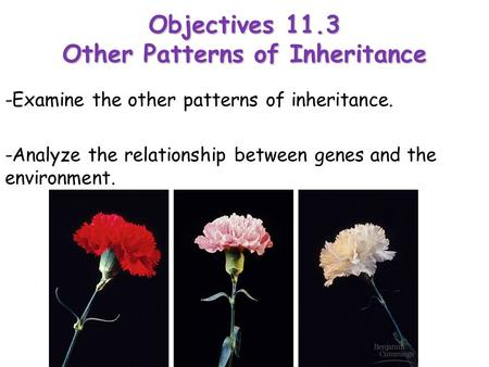 Objectives 11.3 Other Patterns of Inheritance