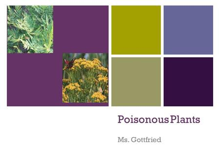 + Poisonous Plants Ms. Gottfried. + Most likely you have them in your pasture… HUNDREDS of plants that are common in North America are poisonous to horses.