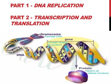 PART 1 - DNA REPLICATION PART 2 - TRANSCRIPTION AND TRANSLATION.