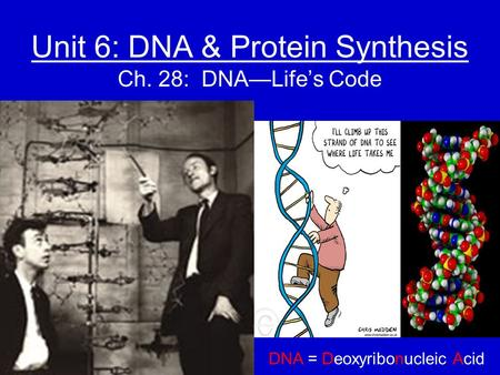 Unit 6: DNA & Protein Synthesis