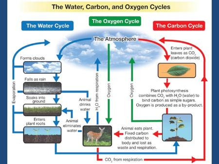 The carbon cycle Trace the pathways through which carbon is released and absorbed in the diagram below: