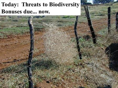 Today: Threats to Biodiversity Bonuses due... now.