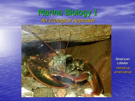 Marine Biology I An Ecological Approach American Lobster Homarus americanus.
