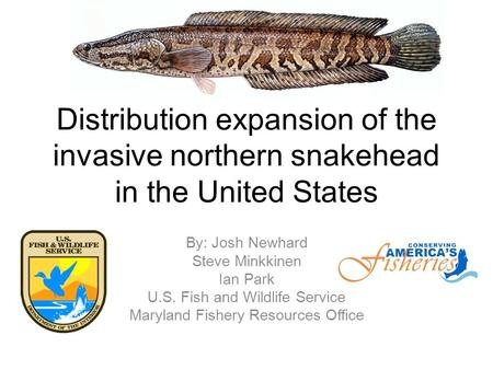 Distribution expansion of the invasive northern snakehead in the United States By: Josh Newhard Steve Minkkinen Ian Park U.S. Fish and Wildlife Service.