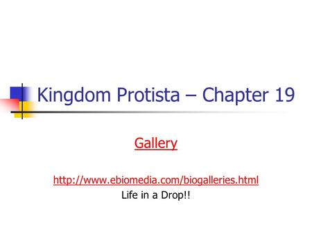 Kingdom Protista – Chapter 19 Gallery  Life in a Drop!!