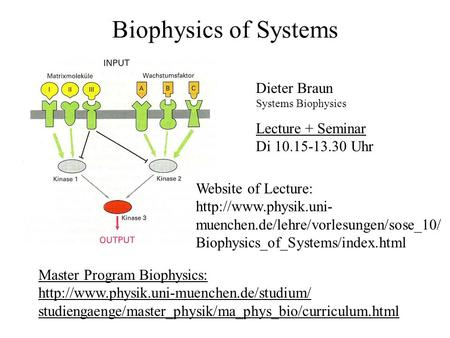 Biophysics of Systems Dieter Braun Systems Biophysics Master Program Biophysics:  studiengaenge/master_physik/ma_phys_bio/curriculum.html.