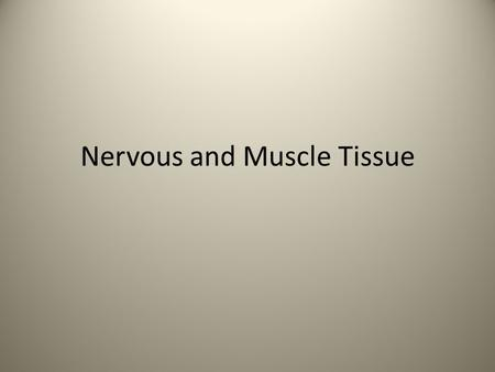 Nervous and Muscle Tissue. Nerve Tissue Nervous tissue is divided into two types: Neurons Supporting cells.