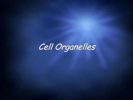 Cell Organelles. Animal Cells  The following slide are organelles typically found in the animal cells.