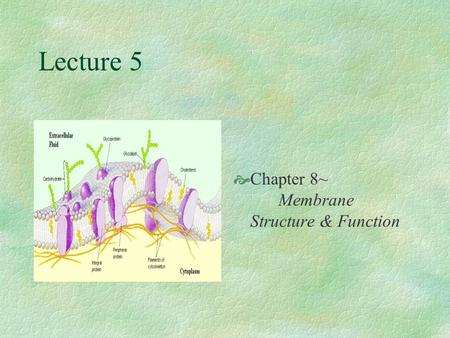 Lecture 5  Chapter 8~ Membrane Structure & Function.