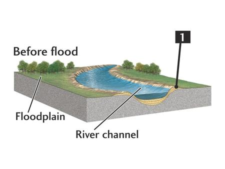 Levees Artificial levees prevent floods Usually made with fine-grained sediments that are easily eroded in floods Higher-quality levees mix coarse.
