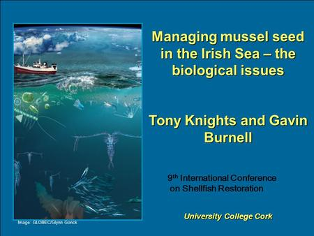 Managing mussel seed in the Irish Sea – the biological issues Tony Knights and Gavin Burnell University College Cork Image: GLOBEC/Glynn Gorick 9 th International.