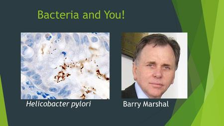 Bacteria and You! Helicobacter pylori Barry Marshal.