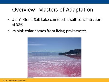 Utah's Great Salt Lake can reach a salt concentration of 32% Its pink color comes from living prokaryotes Overview: Masters of Adaptation © 2011 Pearson.