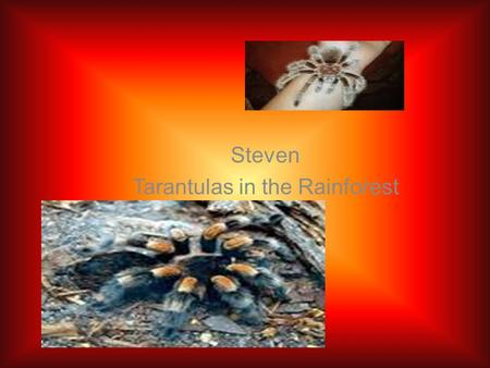 Steven Tarantulas in the Rainforest. Introduction The tropical rain forest in the word are helpful. There are four layer in the rain forest. Rain forests.