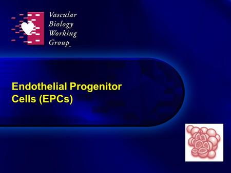 Endothelial Progenitor Cells (EPCs)