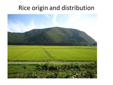 Rice origin and distribution. Word status Rice is the 2nd largest produced cereal in the world. rough rice production in 2008 -661.81millian mt. Rough.