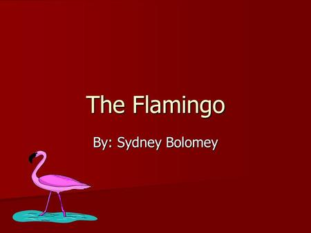 The Flamingo By: Sydney Bolomey. Introduction What's pink, flies, and eats shrimp? A flamingo! I'm going to describe to you what these wonderful animals.
