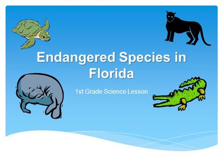 Endangered Species in Florida 1st Grade Science Lesson.