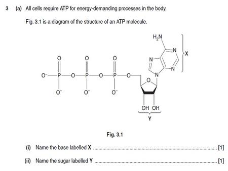 Anaerobic Respiration Learning objectives explain why anaerobic respiration produces a much lower yield of ATP than aerobic respiration; define.