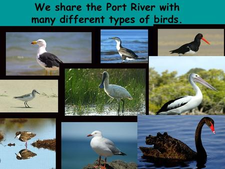 We share the Port River with many different types of birds.