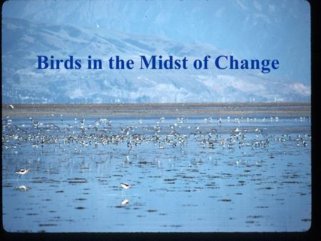 Birds in the Midst of Change Great Salt Lake Dynamics Natural Man caused.