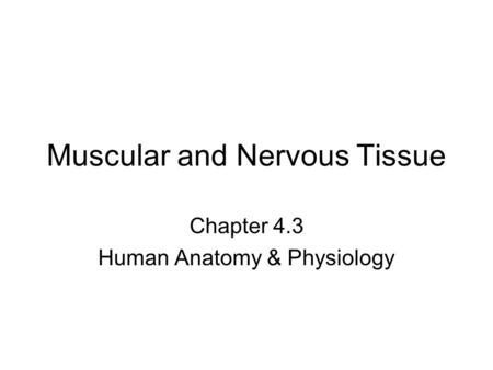 Muscular and Nervous Tissue Chapter 4.3 Human Anatomy & Physiology.