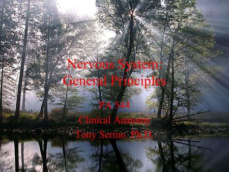 Nervous System: General Principles PA 544 Clinical Anatomy Tony Serino. Ph.D.