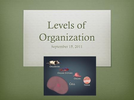 Levels of Organization September 15, 2011. Two types of organisms  Unicellular (single-celled) organisms : the single cell performs all life functions.