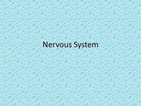 Nervous System. 1. The neuroglial cells making the blood brain barrier are the 1.Microglia 2.Myelin 3.Astocytes 4.Oligodendrocytes.