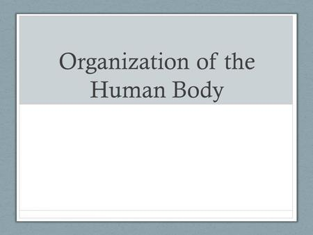 Organization of the Human Body. Do Now There are 11 human body systems. Name as many as you can. As an added bonus, can you tell me what each system does?
