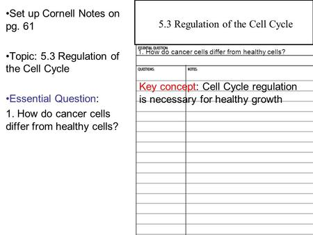 the relationship between mutation cell cycle and cancer