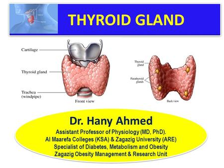 thyroid gland. - ppt video online download, Powerpoint templates