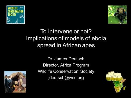 To intervene or not? Implications of models of ebola spread in African apes Dr. James Deutsch Director, Africa Program Wildlife Conservation Society