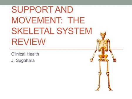 SUPPORT AND MOVEMENT: THE SKELETAL SYSTEM REVIEW Clinical Health J. Sugahara.