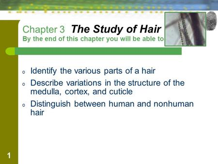 1 Chapter 3 The Study of Hair By the end of this chapter you will be able to: o Identify the various parts of a hair o Describe variations in the structure.