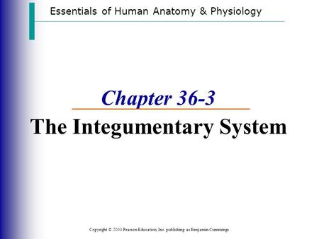 Essentials of Human Anatomy & Physiology Copyright © 2003 Pearson Education, Inc. publishing as Benjamin Cummings Chapter 36-3 The Integumentary System.