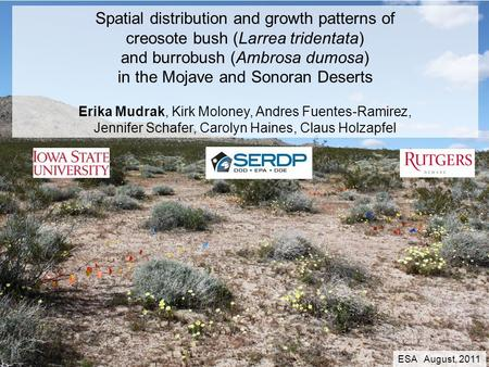 Spatial distribution and growth patterns of creosote bush (Larrea tridentata) and burrobush (Ambrosa dumosa) in the Mojave and Sonoran Deserts Erika Mudrak,