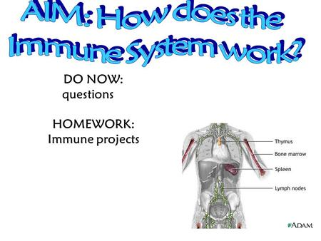 DO NOW: questions HOMEWORK: Immune projects The presence of parasites in an animal will usually result in 1.an increase in meiotic activity within structures.