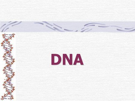DNA. What is DNA? DNA stands for Deoxyribonucleic acid Discovered by 2 scientists Watson & Crick DNA stores all of your genetic information THINK! –